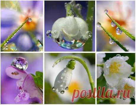 Красота цветка начинается с зёрнышка, а красота человека - с Души!
