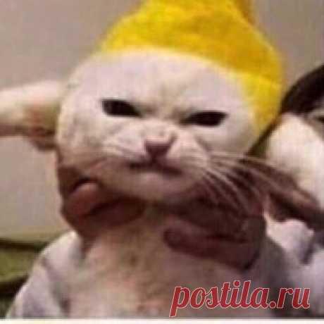 Павел Спиридонов