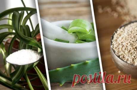 10 натуральных удобрений для комнатных растений, которые не менее эффективны чем магазинные   Design-homes.ru   Пульс Mail.ru Покажем подборку удобрений для комнатных растений, которые можно сделать самостоятельно.