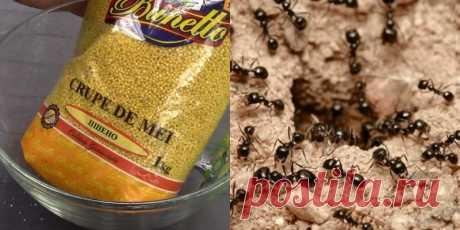Как забыть о муравьях на даче навсегда!   Красивый Дом и Сад