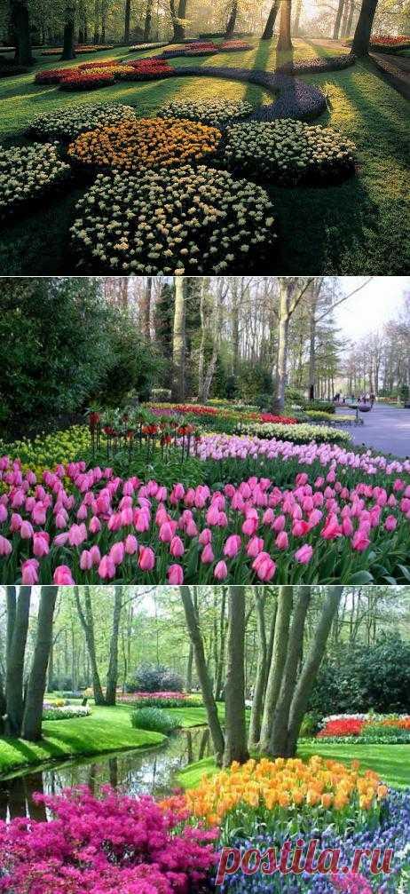 Кеукенхоф – уникальный цветочный парк