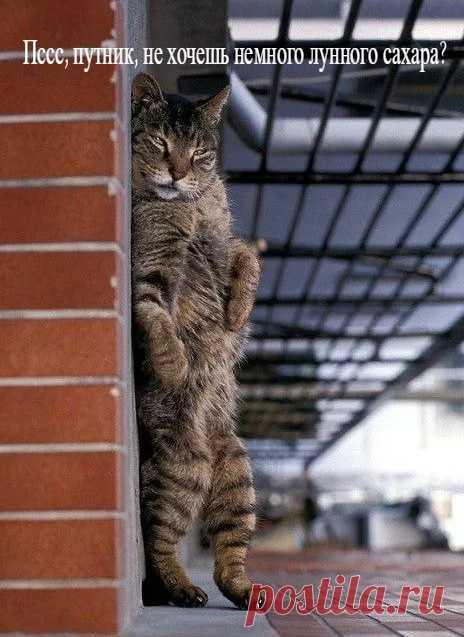 обкуренный коте