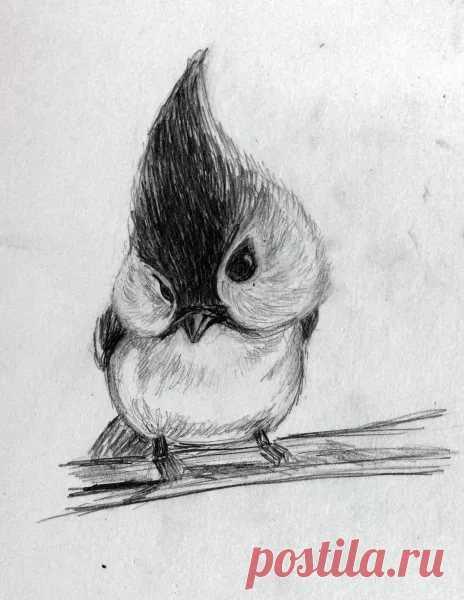 птицы рисовать карандашом легко летние фотографии, вдруг