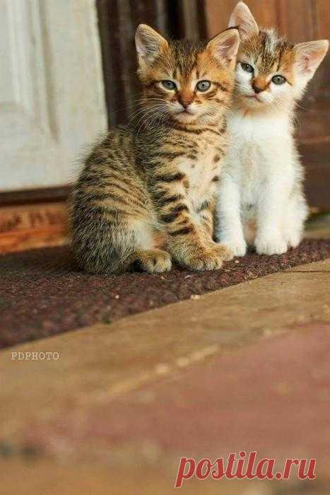 картинки послушный котик этой