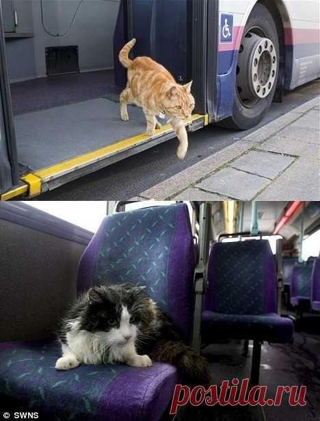 Таки чистую правду писал Булгаков про кота в трамвае )