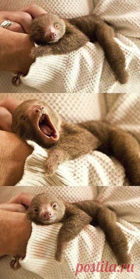 Очень милое пробуждение ленивца!