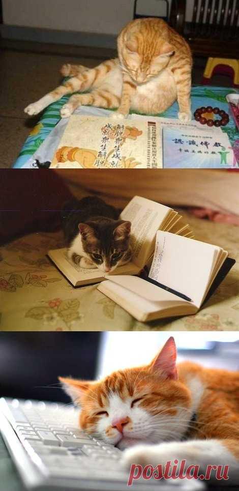 Кот ученый )