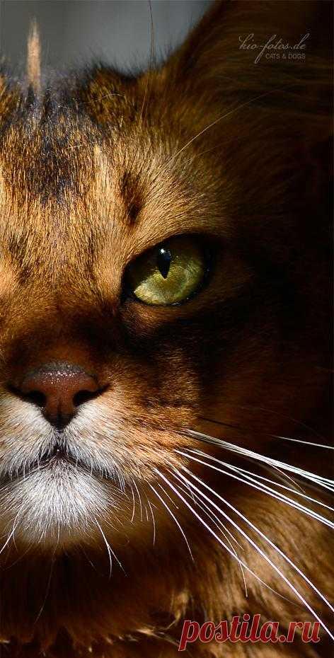 ...die... - Immagine & Foto di kio-fotos di Katzen - Fotografia (31180574) | fotocommunity
