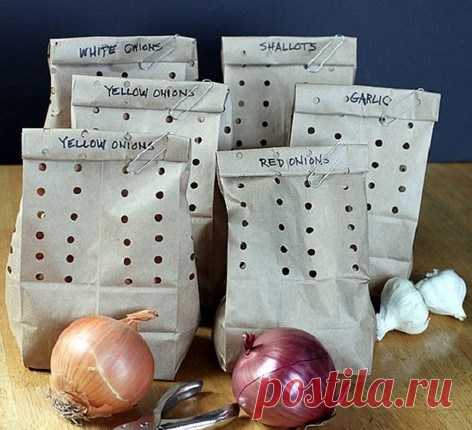 There is no option B here is how it is necessary to store garlic! That it did not dry, did not shrink and kept all the good — Kopilochka of useful tips