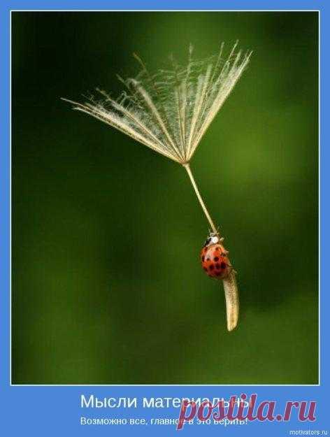 Если нет ветра перемен, поднимающего паруса, налегай на весла. Картинки со смыслом (38 картинок).
