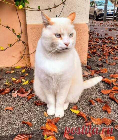 КотоОсень. Зарядитесь позитивом и улыбнитесь! ))   Мечтательная кошка   Яндекс Дзен