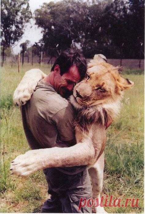 Этот мужчина вырастил львёнка, а затем, когда он стал взрослым, отпустил его в дикую природу. Спустя годы состоялась их встреча
