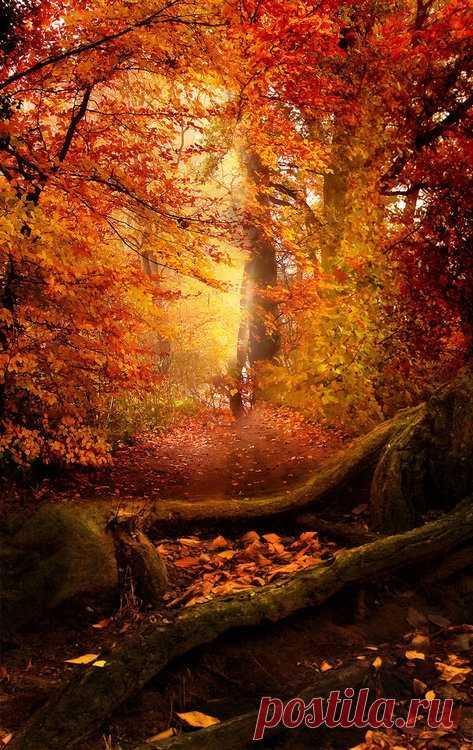 Золотая осень в Пенсильвании, США