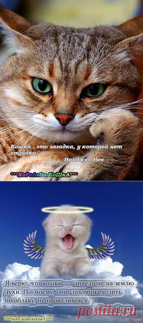 """Я верю, что кошки - сошедшие на землю духи. По-моему, они способны ходить по облаку, не проваливаясь. (Жюль Верн). """"Пушистые"""" афоризмы."""