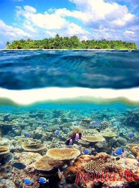 ¡Más cerca al mar! El arrecife de coral cerca de las orillas Tahití
