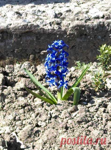 Весна... - Садоводка