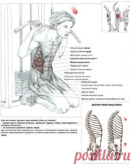 ПРЕСС. Скручивание на блоке. Благодаря скручиванию на блоке создается большая амплитуда движения. Какие из брюшных мышц получат большую нагрузку, будет зависеть непосредственно от техники выполнения упражнения.