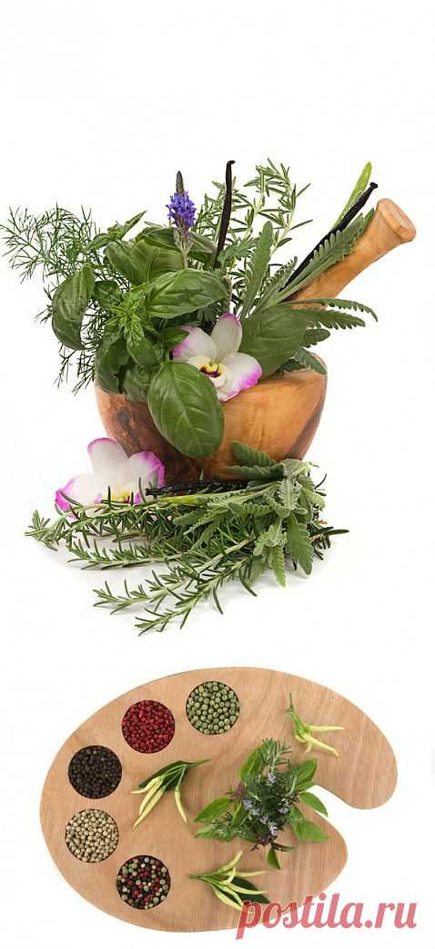 (+1) - Травы, снижающие аппетит | ВСЕГДА В ФОРМЕ!