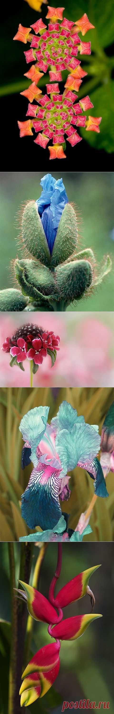 (+1) tema - las flores Insólitas y hermosas | el JARDÍN SOBRE la PEANA