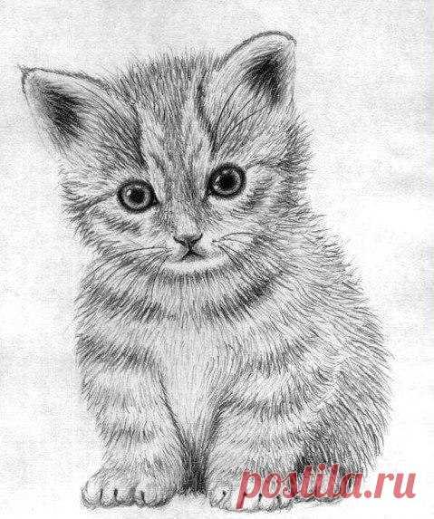 Рисуем маленького котенка — Сделай сам, идеи для творчества - DIY Ideas