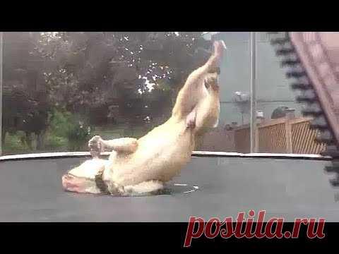 Смешные и удивительные животные 😹 20 😹 Amazing and funny animals - YouTube