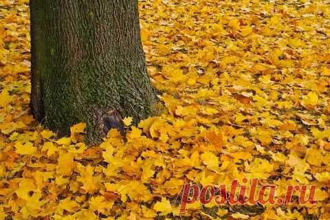 Осенний лес, окутанный туманом и пряным ароматом пожухлых листьев, изумрудного мха и влажной лесной коры... Уютные вечера с красивыми книгами, свежеиспечённым печеньем и нежностью окутывающей словно пушистой кашемировой шалью... Шум дождя за окном...И восхитительные сказки поздних осенних роз... Осень