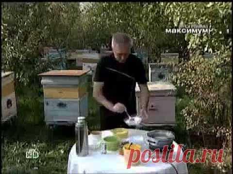 Подделка мёда. Как отличить настоящий мёд от фальсифицированного? - YouTube