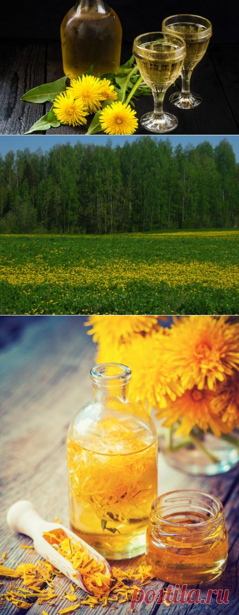 Можно ли приготовить вино из одуванчиков? | Растения