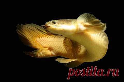 http://aquariumistika.mirtesen.ru/blog/43003522026