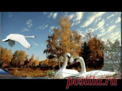 """Лебеди  летят ""  автор  песни   Ян   Райбург - YouTube"