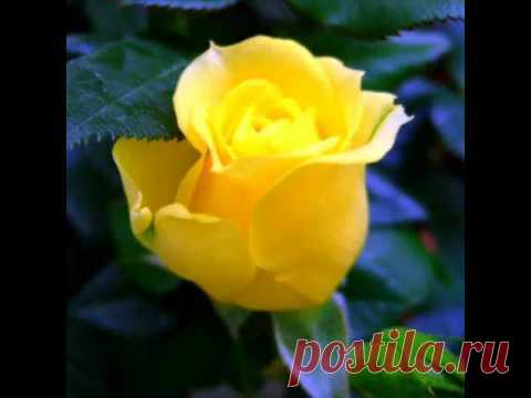 flores azul y amarillo - Buscar con Google