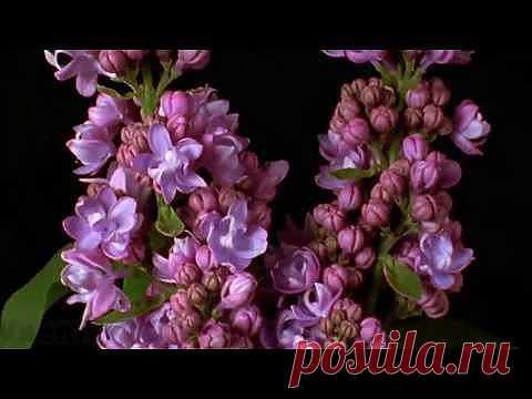 (+1) - Удивительный Мир! Живые цветы! Цветы распускаются! | САД НА ПОДОКОННИКЕ