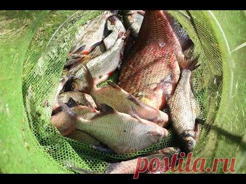 Как я на обучную красную нить наловил 4 кило подлещиков за рыбалку?