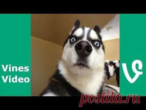 Funny Animals Vines Vine compilation November 2016