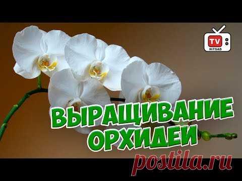 Las orquídeas \ud83c\udf3a los Rasgos de la cultivación \ud83c\udf3a la Emisión en directo