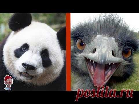 7 ANIMALES AMABLES, que pueden ACABARLE