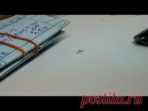 Муравей попытался украсть крупный бриллиант из итальянского магазина, Видео - новости Италии