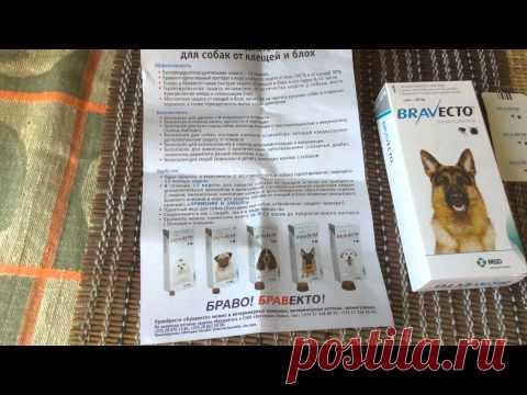 Бравекто (Bravecto) обзор и кормление собаки.