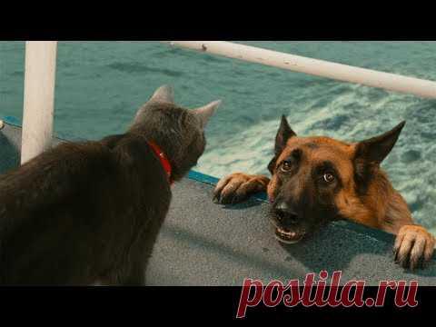 ПОПРОБУЙ НЕ ЗАСМЕЯТЬСЯ - Смешные Приколы и фейлы с Животными до слез, смешные коты #72