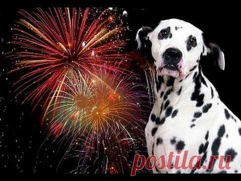Dogs vs. Fireworks | FunCage