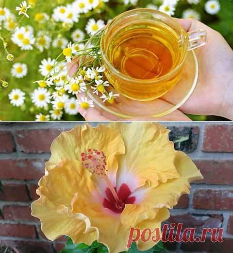 (+1) - Простуда. Лечим простуду чаем | КРАСОТА И ЗДОРОВЬЕ