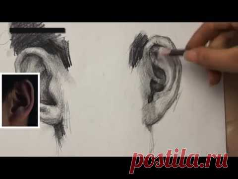 How to Draw Ear 02