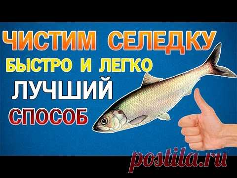 How to clean herring quickly and without bones