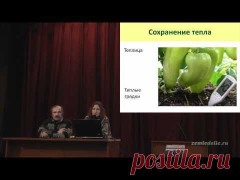 Cultivation of pepper - YouTube