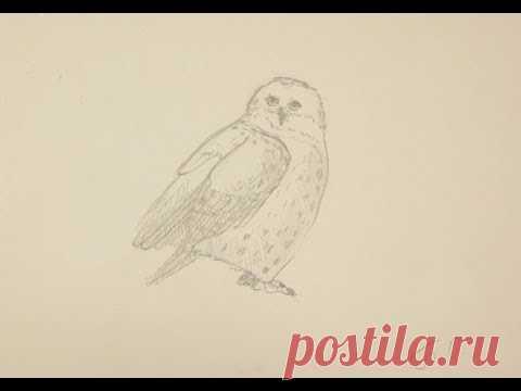 Как нарисовать сову поэтапно простым карандашом начинающие