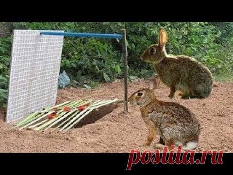 أغرب فخ لصيد الأرانب والحيوانات البرية و الطيور