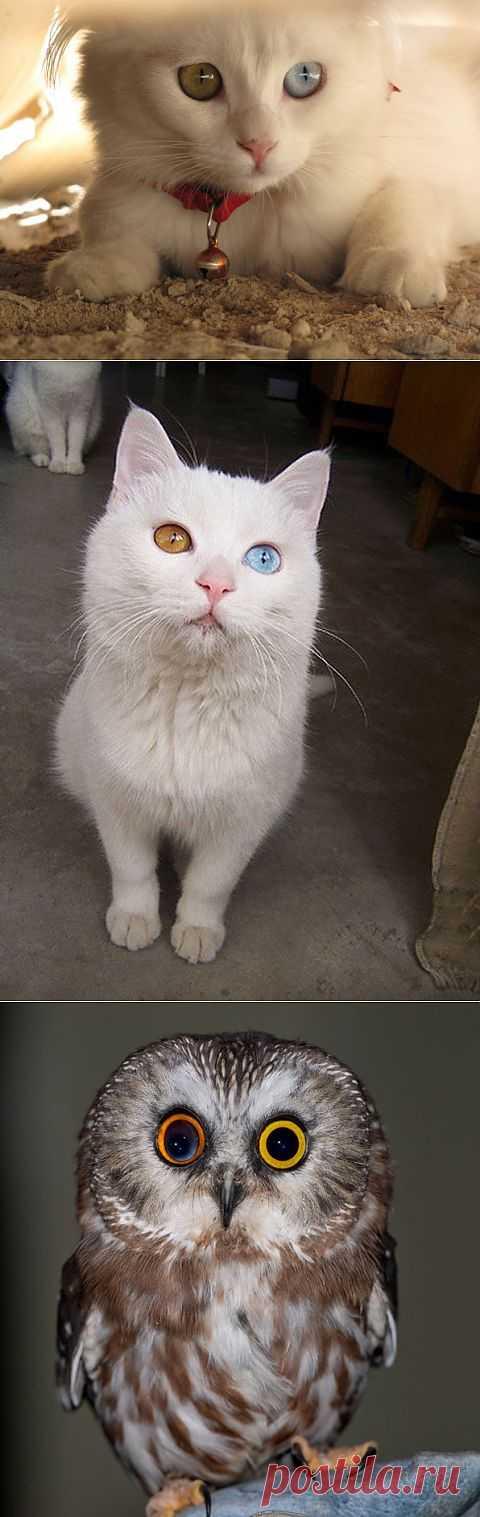 20 животных с разноцветными глазами