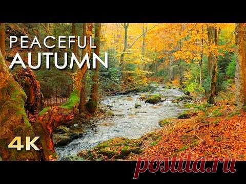 Осень в лесу. Час созерцания