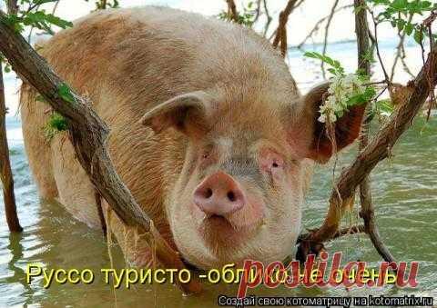"""""""ЗВЕРоКОТоМАТРИЦА"""".Заряжаемся позитивом!!!"""