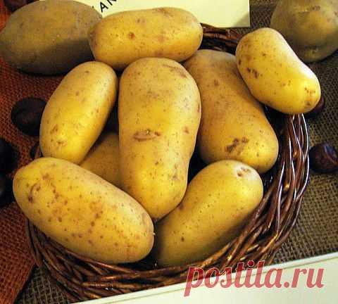 Как правильно выбрать, сохранить и приготовить молодую картошку: http://aif.mirtesen.ru/blog/43753355286